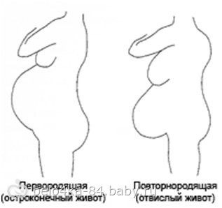 bolshoy-lohmatiy-klitor