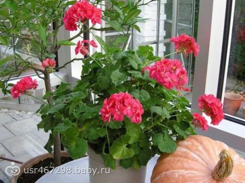 Домашние цветы как ухаживать