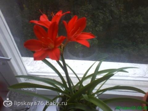 Открываю секрет о цветочке)