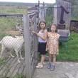 кормим козу