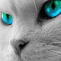Котика